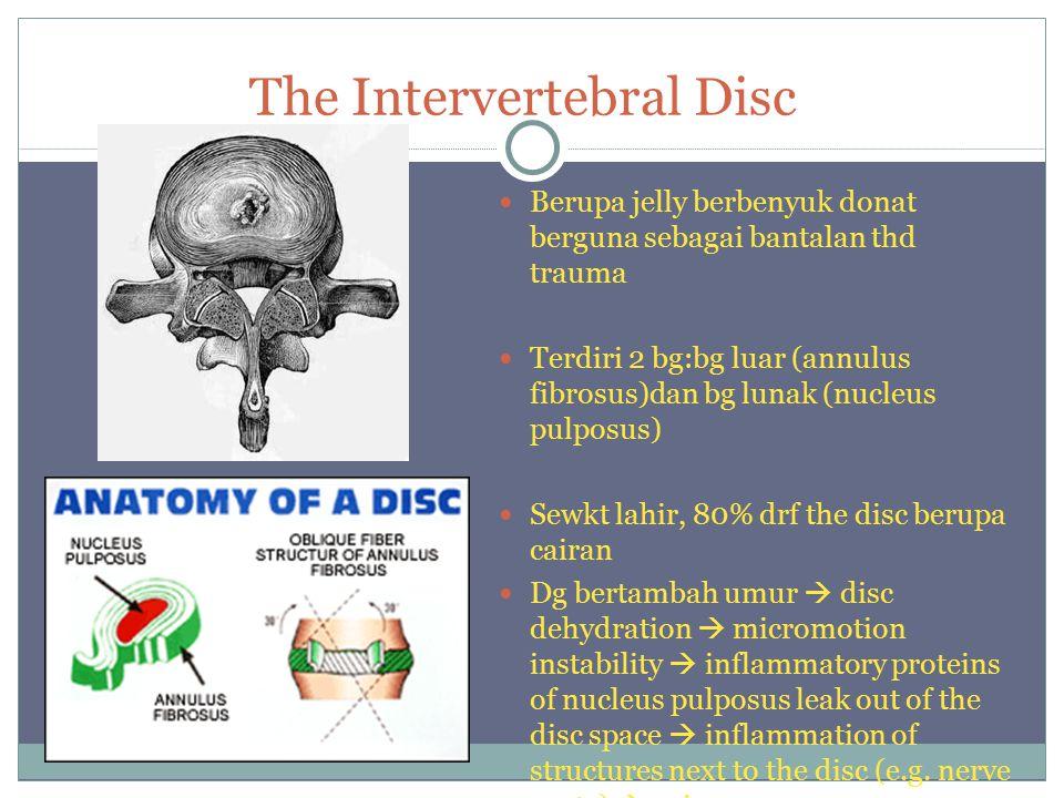 The Intervertebral Disc Berupa jelly berbenyuk donat berguna sebagai bantalan thd trauma Terdiri 2 bg:bg luar (annulus fibrosus)dan bg lunak (nucleus