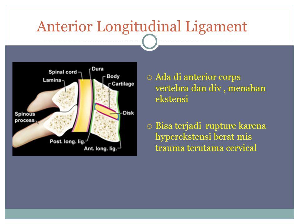 Anterior Longitudinal Ligament  Ada di anterior corps vertebra dan div, menahan ekstensi  Bisa terjadi rupture karena hyperekstensi berat mis trauma terutama cervical
