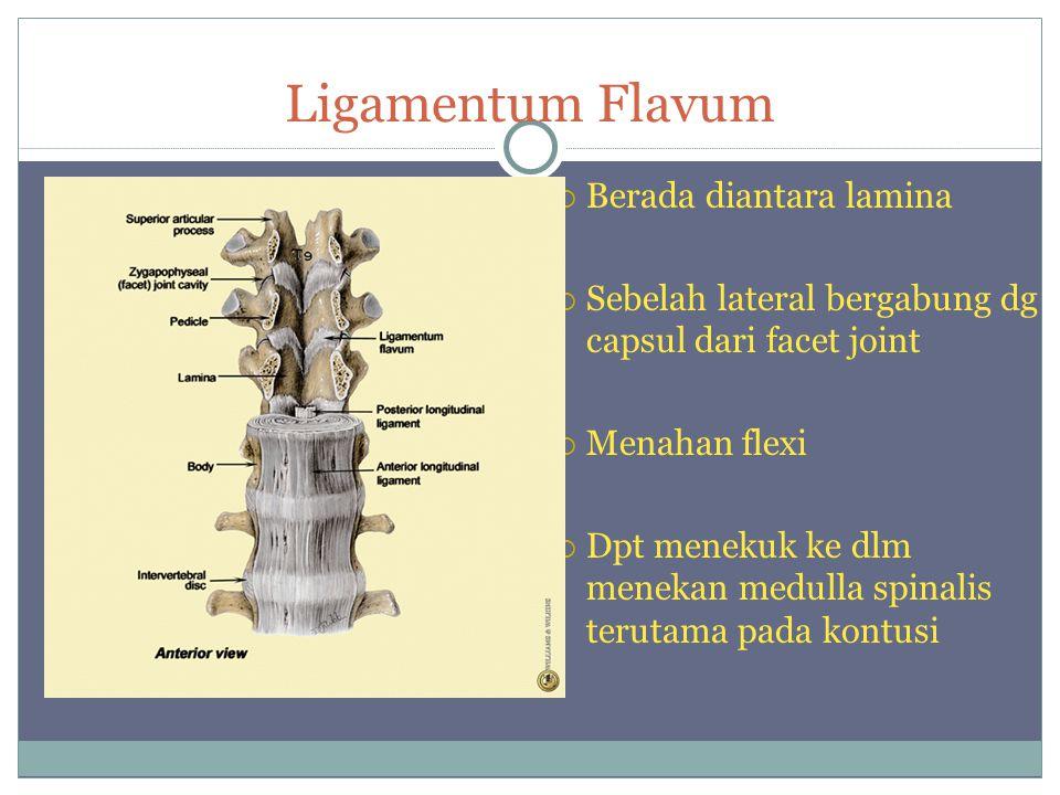 Ligamentum Flavum  Berada diantara lamina  Sebelah lateral bergabung dg capsul dari facet joint  Menahan flexi  Dpt menekuk ke dlm menekan medulla spinalis terutama pada kontusi