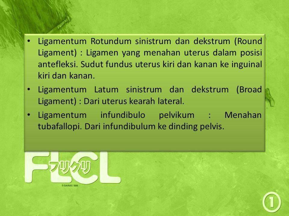 Ligamentum Rotundum sinistrum dan dekstrum (Round Ligament) : Ligamen yang menahan uterus dalam posisi antefleksi. Sudut fundus uterus kiri dan kanan