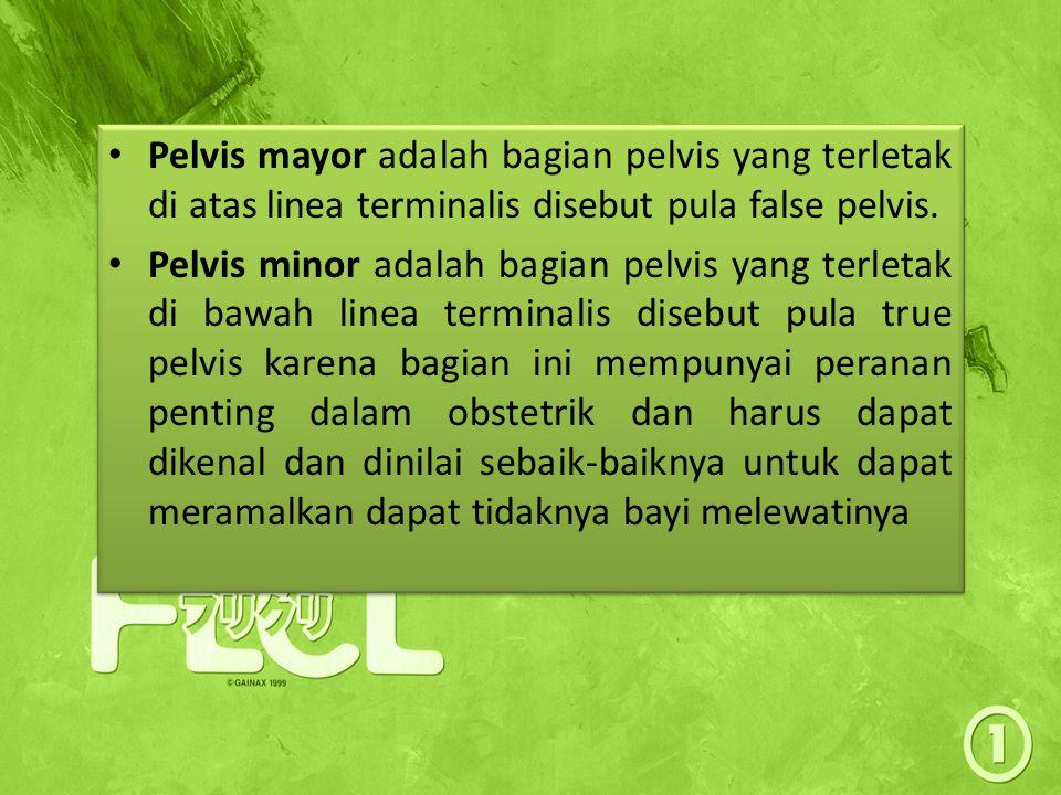 Pelvis mayor adalah bagian pelvis yang terletak di atas linea terminalis disebut pula false pelvis. Pelvis minor adalah bagian pelvis yang terletak di
