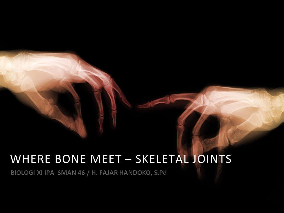 WHERE BONE MEET – SKELETAL JOINTS BIOLOGI XI IPA SMAN 46 / H. FAJAR HANDOKO, S.Pd