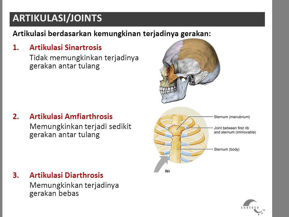 1.Artikulasi Sinartrosis Tidak memungkinkan terjadinya gerakan antar tulang 2.Artikulasi Amfiarthrosis Memungkinkan terjadi sedikit gerakan antar tula