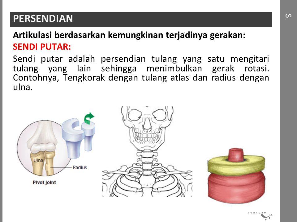 Artikulasi berdasarkan kemungkinan terjadinya gerakan: SENDI PUTAR: Sendi putar adalah persendian tulang yang satu mengitari tulang yang lain sehingga