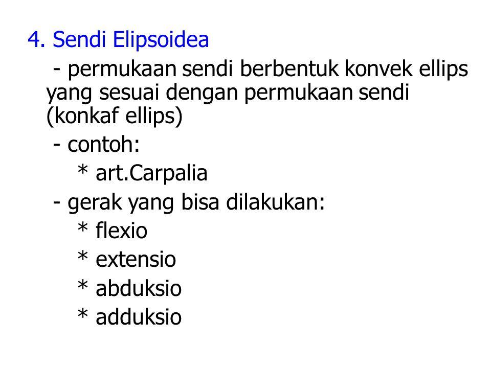 4. Sendi Elipsoidea - permukaan sendi berbentuk konvek ellips yang sesuai dengan permukaan sendi (konkaf ellips) - contoh: * art.Carpalia - gerak yang