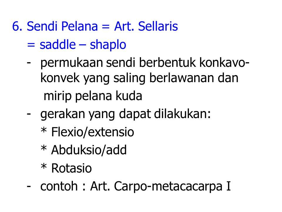 6.Sendi Pelana = Art.