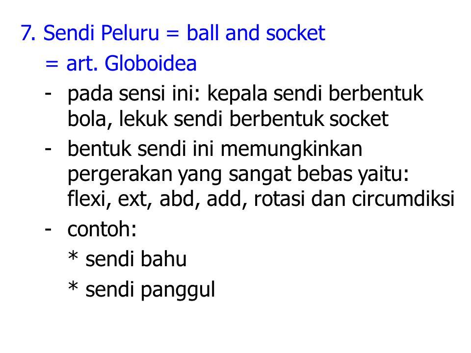 7.Sendi Peluru = ball and socket = art.