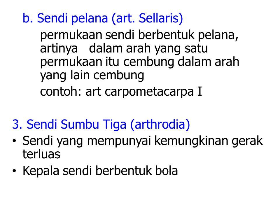 b.Sendi pelana (art.