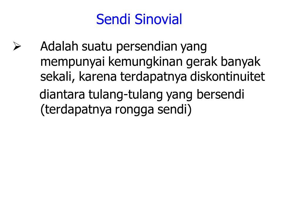 Sendi Sinovial  Adalah suatu persendian yang mempunyai kemungkinan gerak banyak sekali, karena terdapatnya diskontinuitet diantara tulang-tulang yang bersendi (terdapatnya rongga sendi)