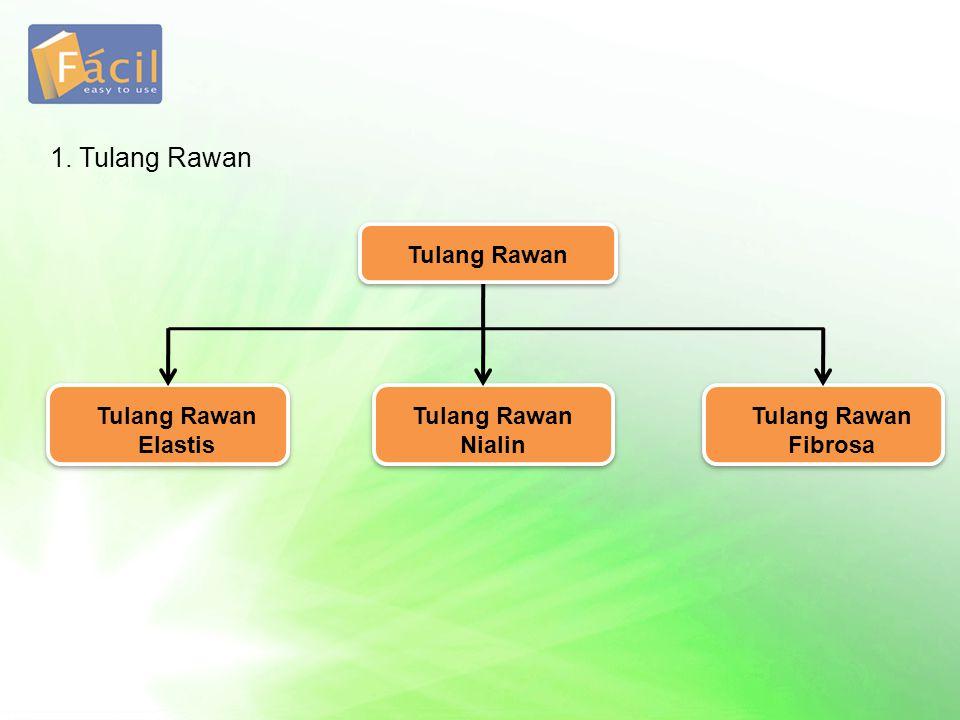 1. Tulang Rawan Tulang Rawan Elastis Tulang Rawan Fibrosa Tulang Rawan Nialin Tulang Rawan