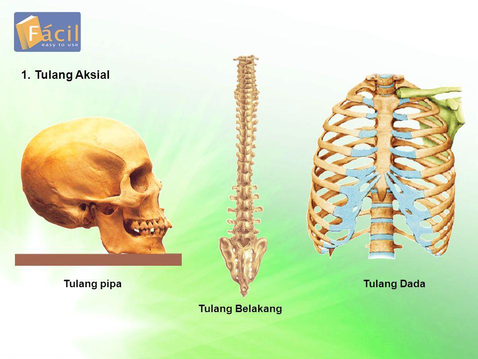 Tulang Rangka aksial Rangka apendikular Otot lurik Otot polos Otot jantung Sendi mati Sendi kaku Sendi gerak Kesimpulan Sistem Gerak pada Manusia OtotSendi Rangka