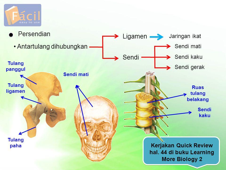 Persendian Antartulang dihubungkan Ligamen Sendi Jaringan ikat Sendi mati Sendi kaku Sendi gerak Kerjakan Quick Review hal. 44 di buku Learning More B