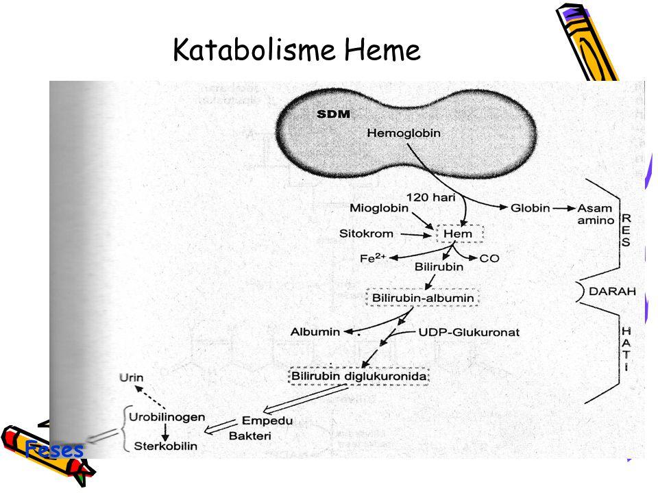 Katabolisme Heme Feses