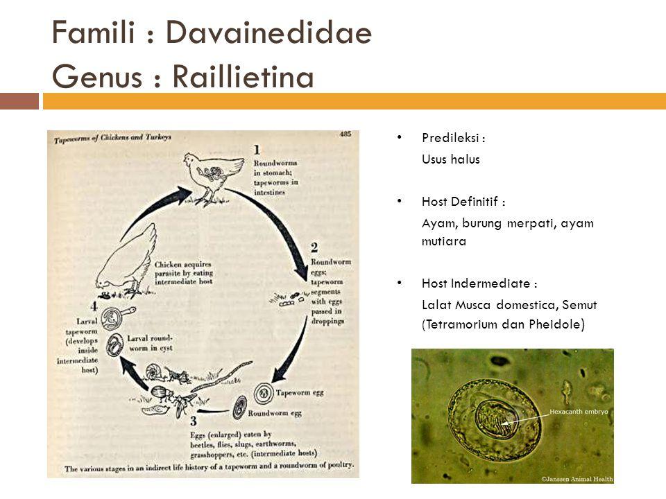 Famili : Davainedidae Genus : Raillietina Predileksi : Usus halus Host Definitif : Ayam, burung merpati, ayam mutiara Host Indermediate : Lalat Musca