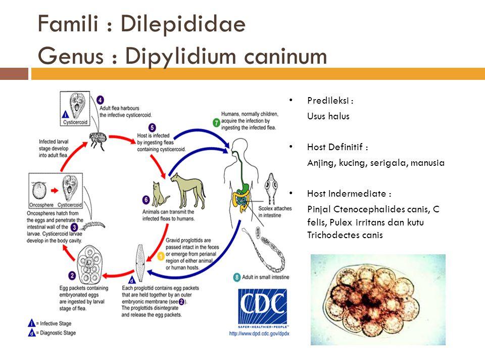 Famili : Dilepididae Genus : Dipylidium caninum Predileksi : Usus halus Host Definitif : Anjing, kucing, serigala, manusia Host Indermediate : Pinjal