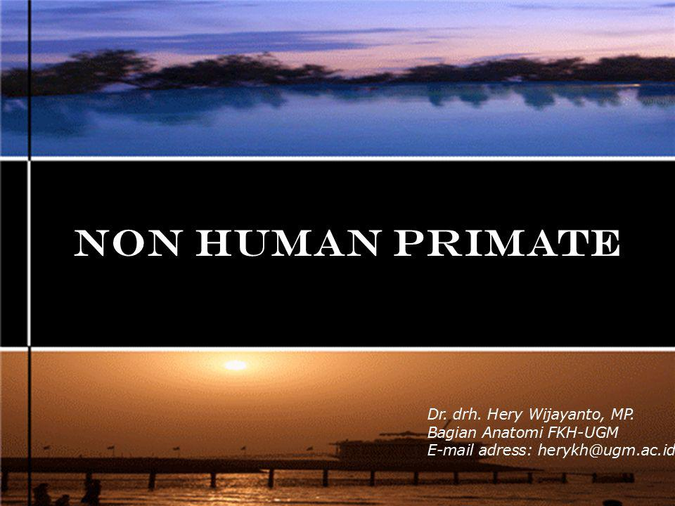 NON HUMAN PRIMATE Dr. drh. Hery Wijayanto, MP. Bagian Anatomi FKH-UGM E-mail adress: herykh@ugm.ac.id
