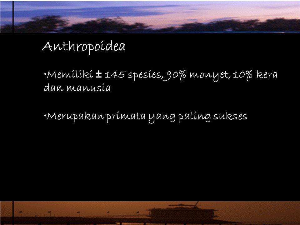 Anthropoidea Memiliki ± 145 spesies, 90% monyet, 10% kera dan manusia Merupakan primata yang paling sukses