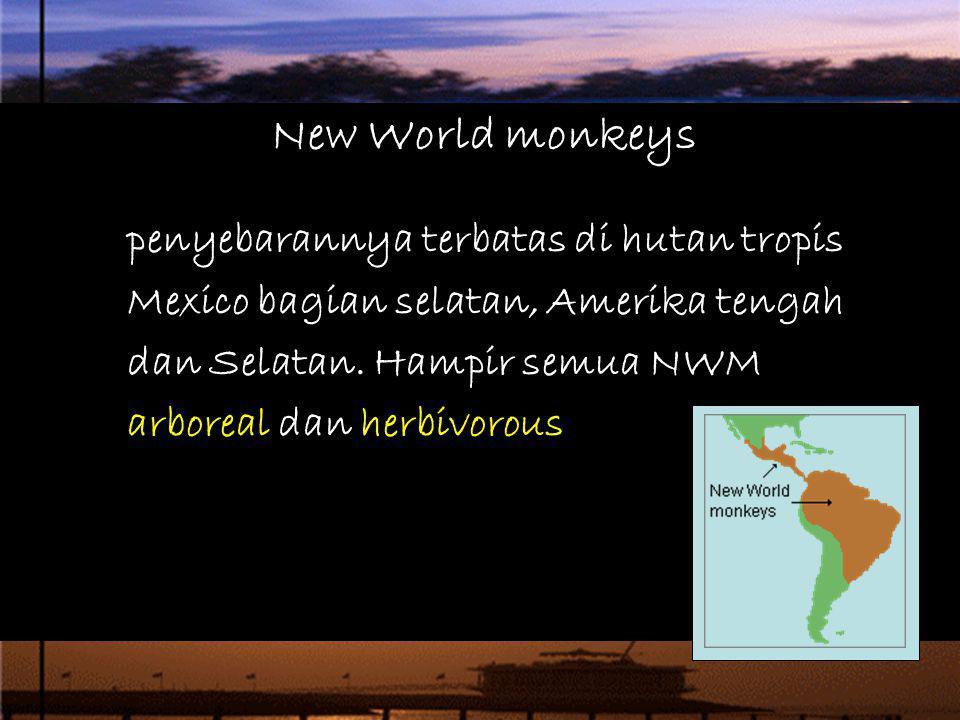 penyebarannya terbatas di hutan tropis Mexico bagian selatan, Amerika tengah dan Selatan. Hampir semua NWM arboreal dan herbivorous New World monkeys