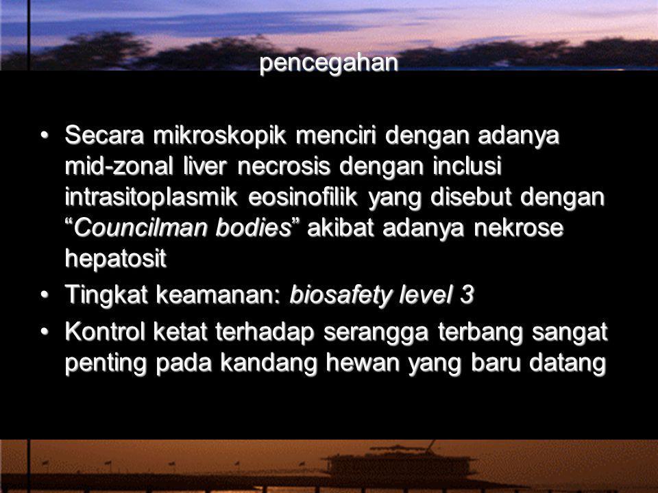 """Secara mikroskopik menciri dengan adanya mid-zonal liver necrosis dengan inclusi intrasitoplasmik eosinofilik yang disebut dengan """"Councilman bodies"""""""