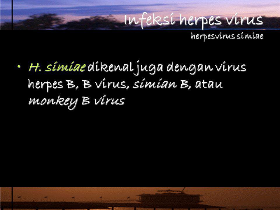 H. simiae dikenal juga dengan virus herpes B, B virus, simian B, atau monkey B virusH. simiae dikenal juga dengan virus herpes B, B virus, simian B, a