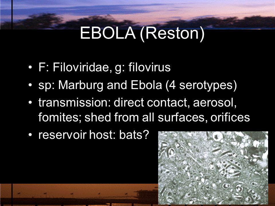 EBOLA (Reston) F: Filoviridae, g: filovirus sp: Marburg and Ebola (4 serotypes) transmission: direct contact, aerosol, fomites; shed from all surfaces
