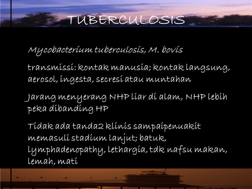 TUBERCULOSIS Mycobacterium tuberculosis, M. bovis transmissi: kontak manusia; kontak langsung, aerosol, ingesta, secresi atau muntahan Jarang menyeran