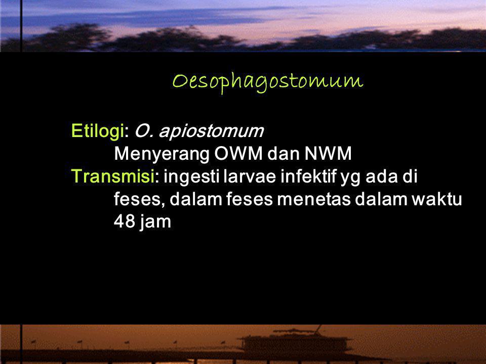 Oesophagostomum Etilogi: O. apiostomum Menyerang OWM dan NWM Transmisi: ingesti larvae infektif yg ada di feses, dalam feses menetas dalam waktu 48 ja