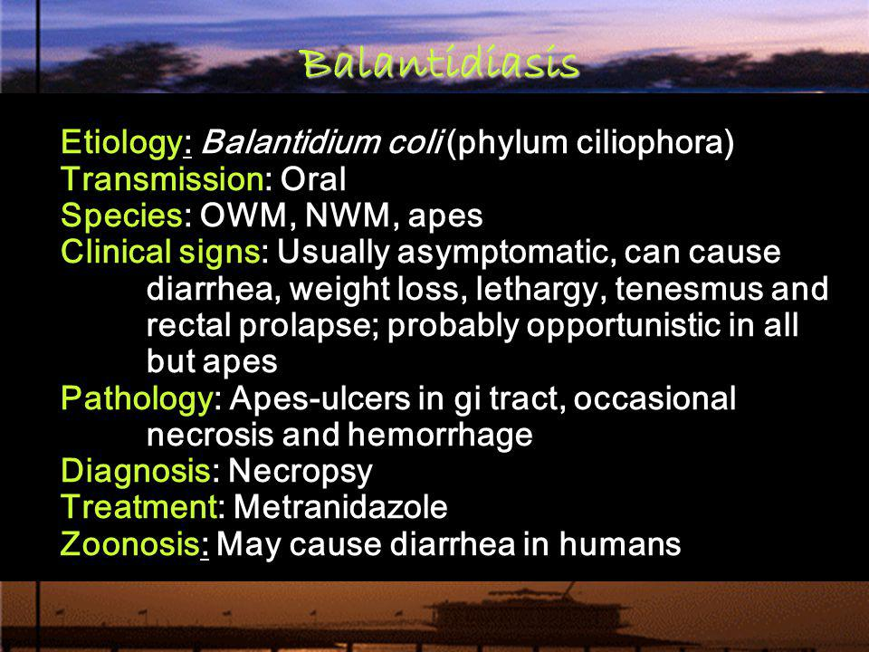 Etiology: Balantidium coli (phylum ciliophora) Transmission: Oral Species: OWM, NWM, apes Clinical signs: Usually asymptomatic, can cause diarrhea, we