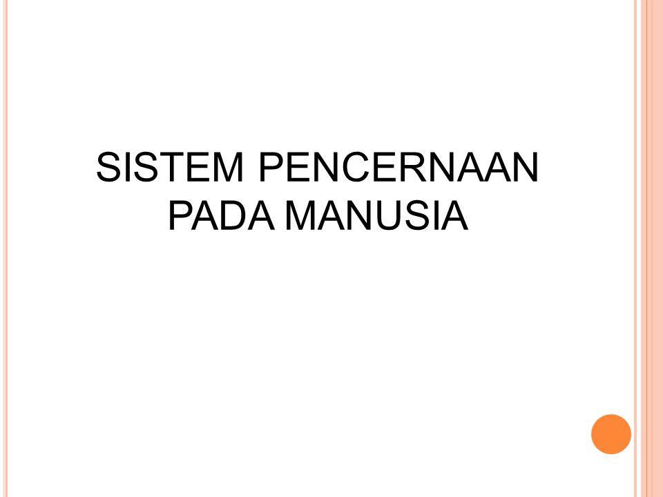 SISTEM PENCERNAAN PADA MANUSIA