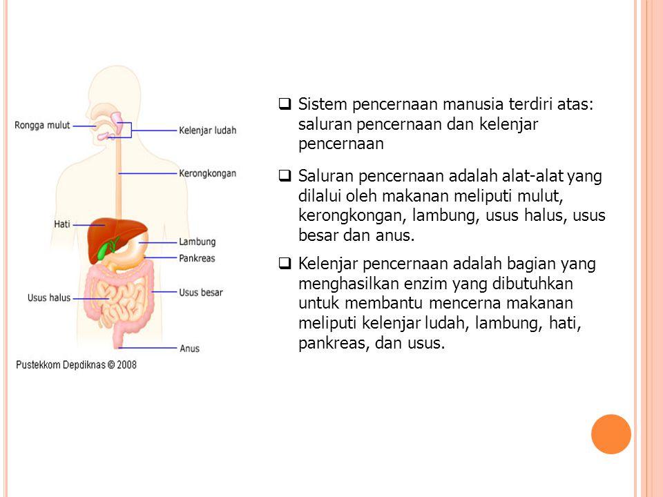  Sistem pencernaan manusia terdiri atas: saluran pencernaan dan kelenjar pencernaan  Saluran pencernaan adalah alat-alat yang dilalui oleh makanan m