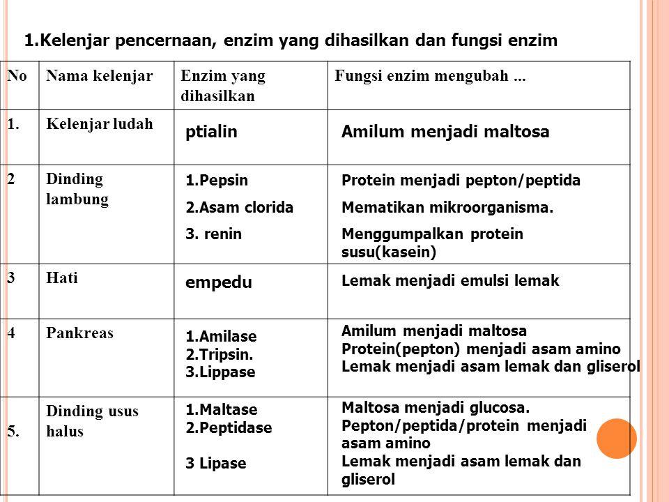 1.Kelenjar pencernaan, enzim yang dihasilkan dan fungsi enzim NoNama kelenjarEnzim yang dihasilkan Fungsi enzim mengubah... 1.Kelenjar ludah 2Dinding