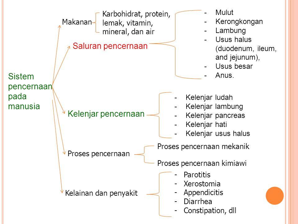Sistem pencernaan pada manusia Saluran pencernaan Kelenjar pencernaan -Mulut -Kerongkongan -Lambung -Usus halus (duodenum, ileum, and jejunum), -Usus
