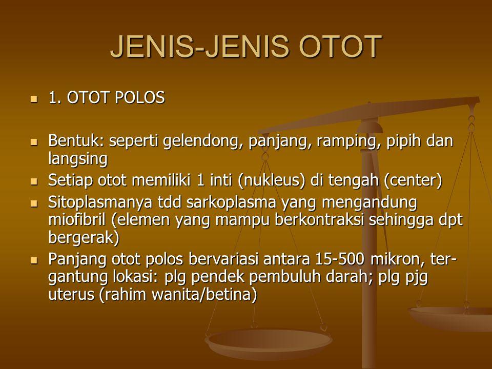 JENIS-JENIS OTOT 1. OTOT POLOS 1. OTOT POLOS Bentuk: seperti gelendong, panjang, ramping, pipih dan langsing Bentuk: seperti gelendong, panjang, rampi