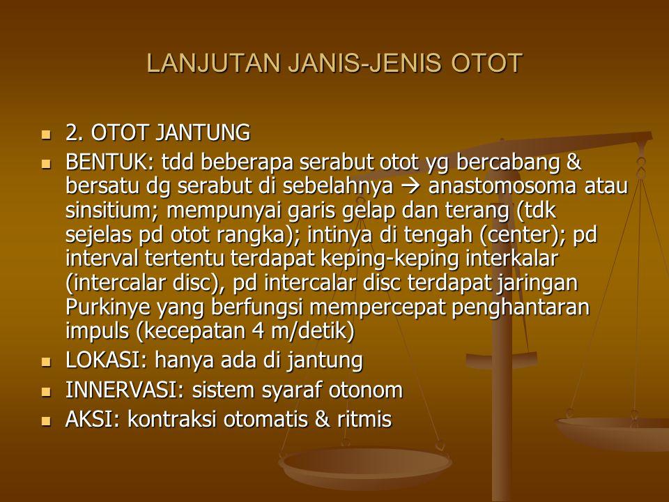 LANJUTAN JANIS-JENIS OTOT 2. OTOT JANTUNG 2. OTOT JANTUNG BENTUK: tdd beberapa serabut otot yg bercabang & bersatu dg serabut di sebelahnya  anastomo