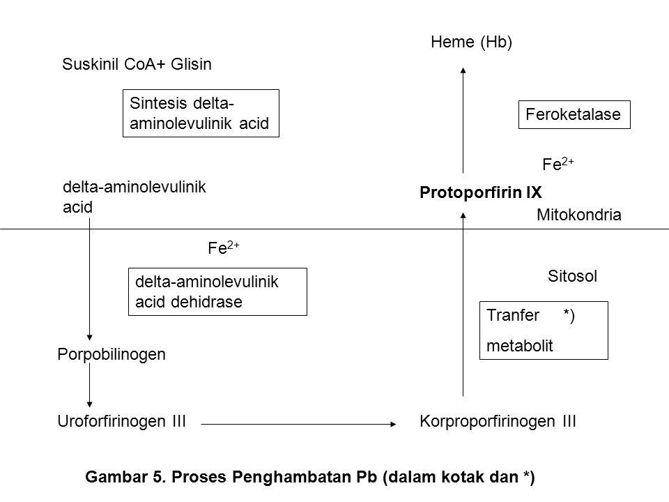 Suskinil CoA+ Glisin Sintesis delta- aminolevulinik acid Heme (Hb) Feroketalase delta-aminolevulinik acid delta-aminolevulinik acid dehidrase Fe 2+ Porpobilinogen Uroforfirinogen IIIKorproporfirinogen III Tranfer *) metabolit Sitosol Protoporfirin IX Fe 2+ Mitokondria Gambar 5.