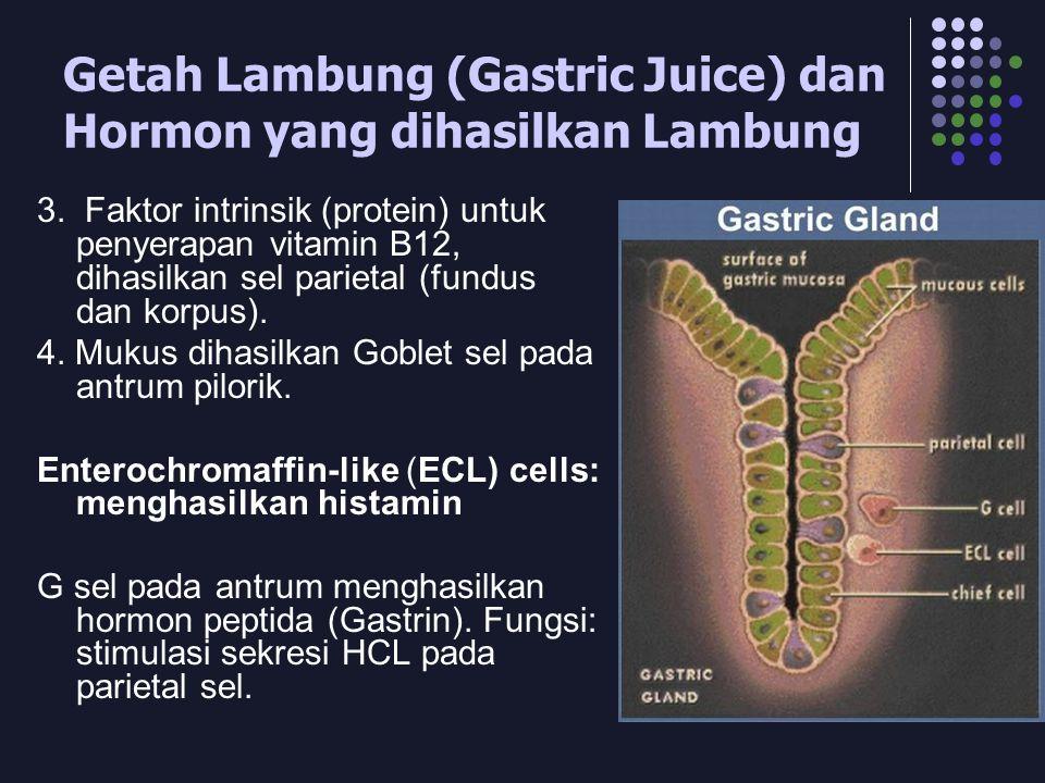 Getah Lambung (Gastric Juice) dan Hormon yang dihasilkan Lambung 3. Faktor intrinsik (protein) untuk penyerapan vitamin B12, dihasilkan sel parietal (