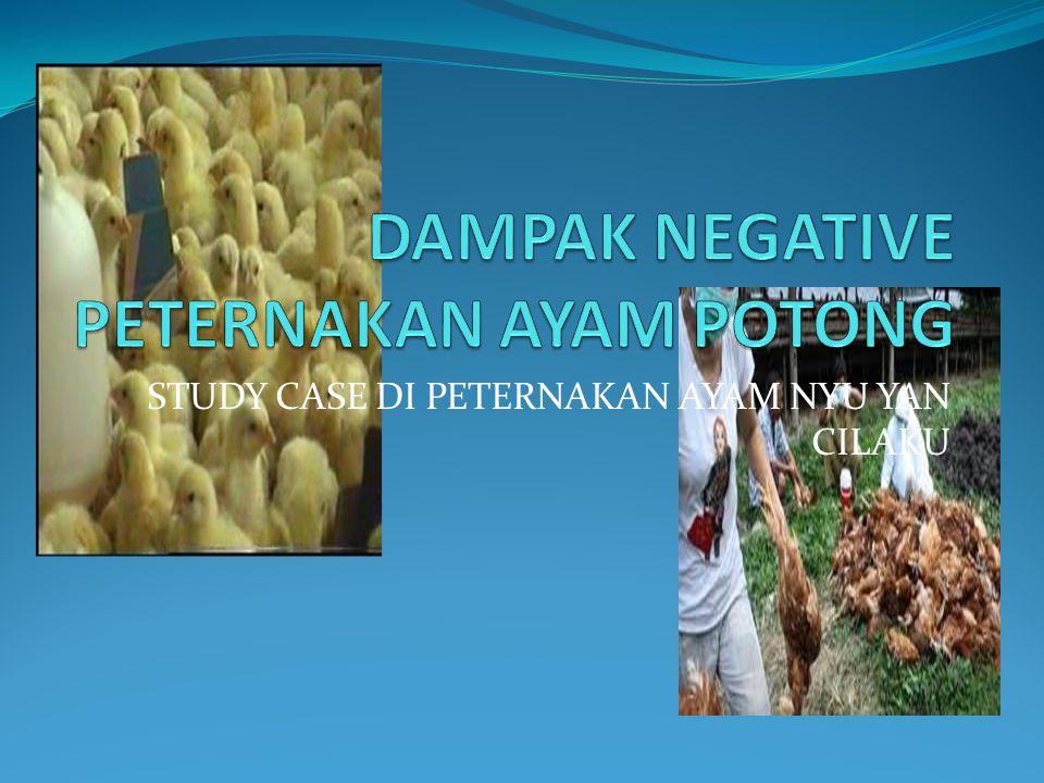 STUDY CASE DI PETERNAKAN AYAM NYU YAN CILAKU