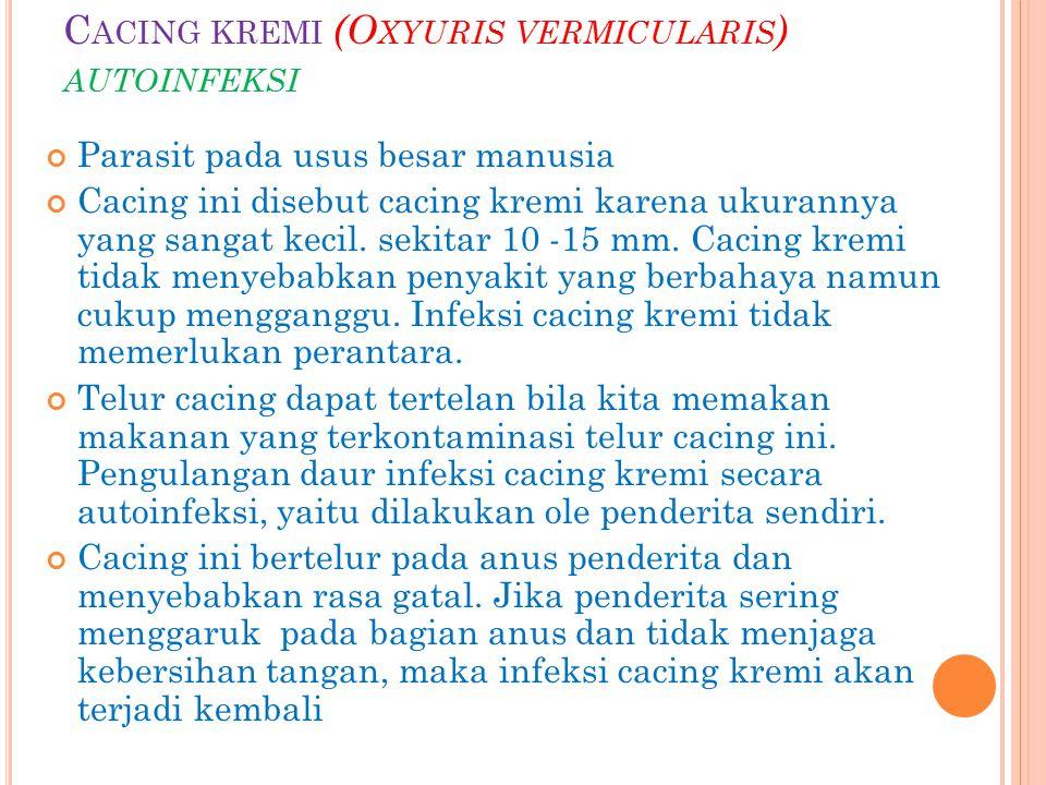 C ACING KREMI (O XYURIS VERMICULARIS ) AUTOINFEKSI Parasit pada usus besar manusia Cacing ini disebut cacing kremi karena ukurannya yang sangat kecil.