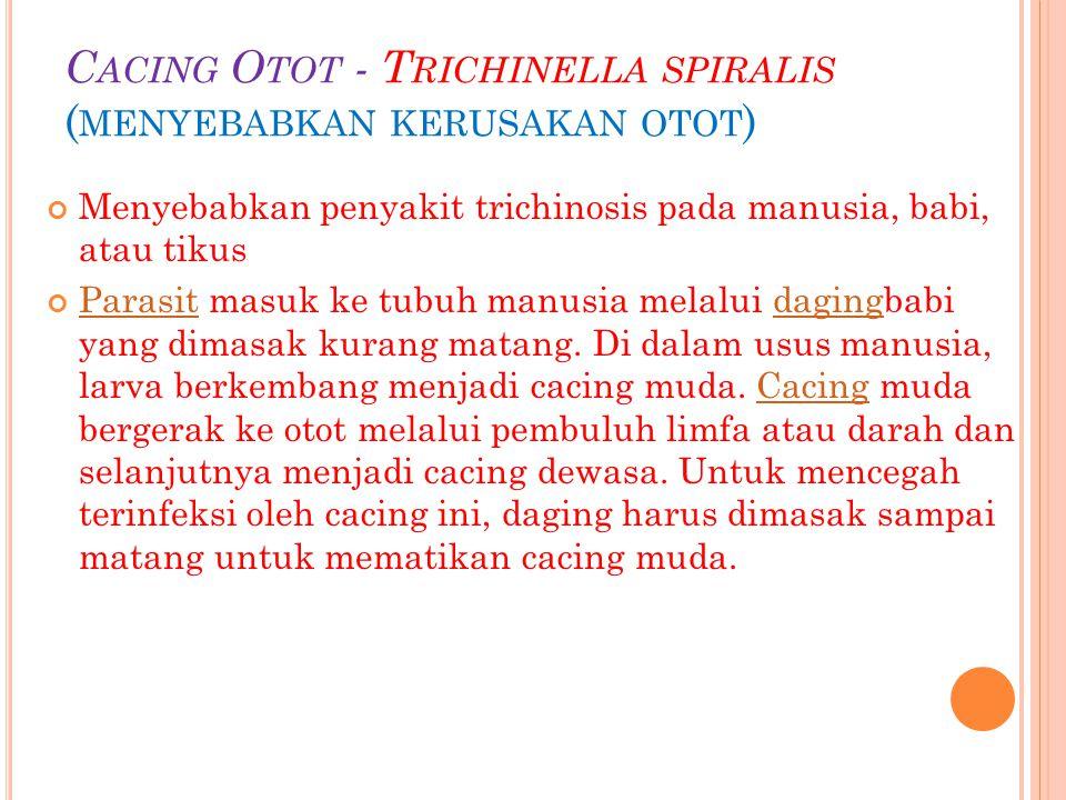 C ACING O TOT - T RICHINELLA SPIRALIS ( MENYEBABKAN KERUSAKAN OTOT ) Menyebabkan penyakit trichinosis pada manusia, babi, atau tikus ParasitParasit ma