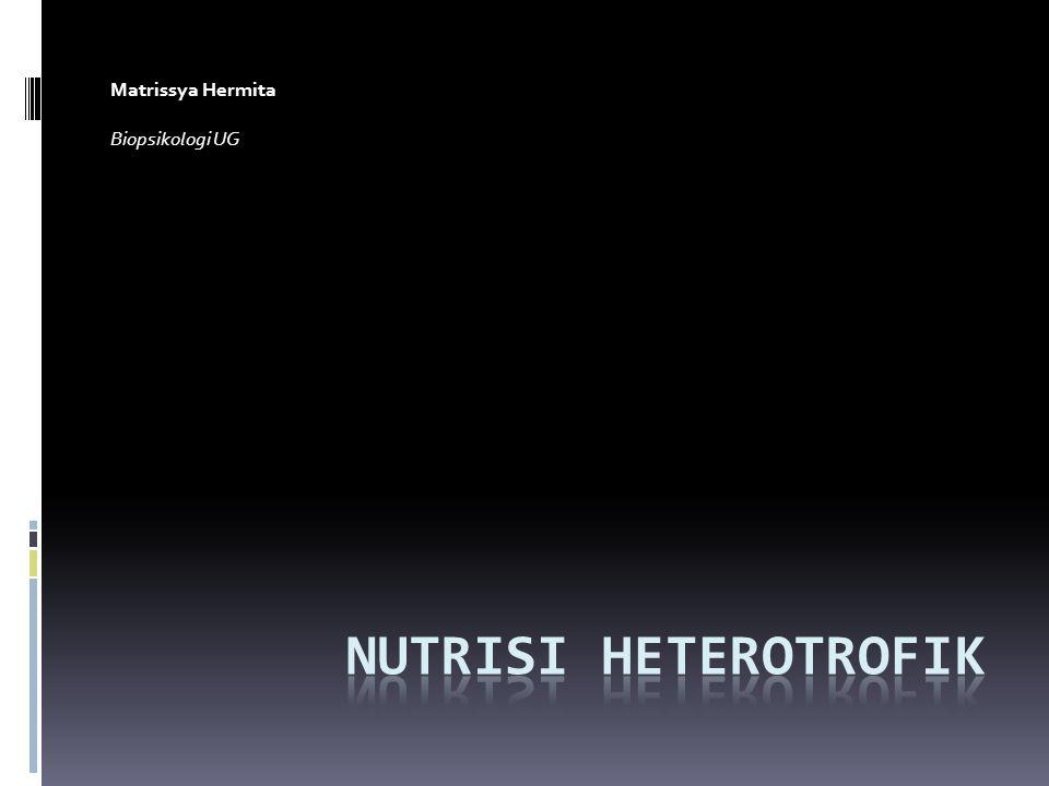 Nutrisi heterotrof Nutrisi yang mencangkup ketergantungan pada molekul – molekul organic yang tersedia sebelumnya.