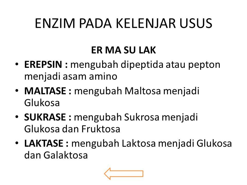 ENZIM PADA KELENJAR USUS ER MA SU LAK EREPSIN : mengubah dipeptida atau pepton menjadi asam amino MALTASE : mengubah Maltosa menjadi Glukosa SUKRASE : mengubah Sukrosa menjadi Glukosa dan Fruktosa LAKTASE : mengubah Laktosa menjadi Glukosa dan Galaktosa