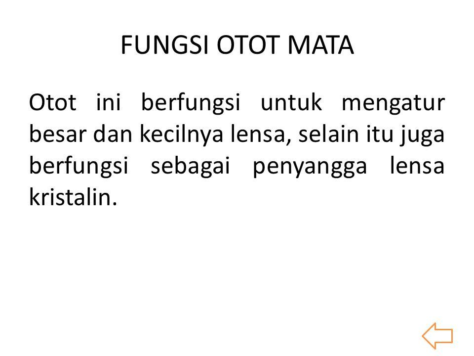 FUNGSI OTOT MATA Otot ini berfungsi untuk mengatur besar dan kecilnya lensa, selain itu juga berfungsi sebagai penyangga lensa kristalin.