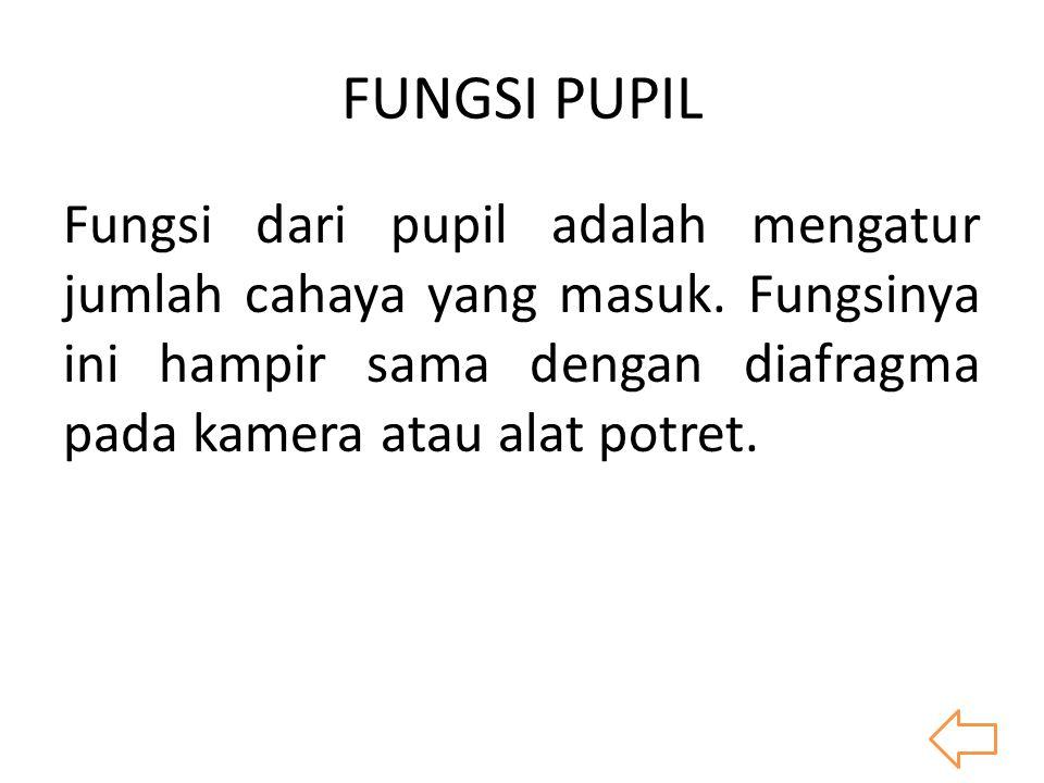 FUNGSI PUPIL Fungsi dari pupil adalah mengatur jumlah cahaya yang masuk. Fungsinya ini hampir sama dengan diafragma pada kamera atau alat potret.