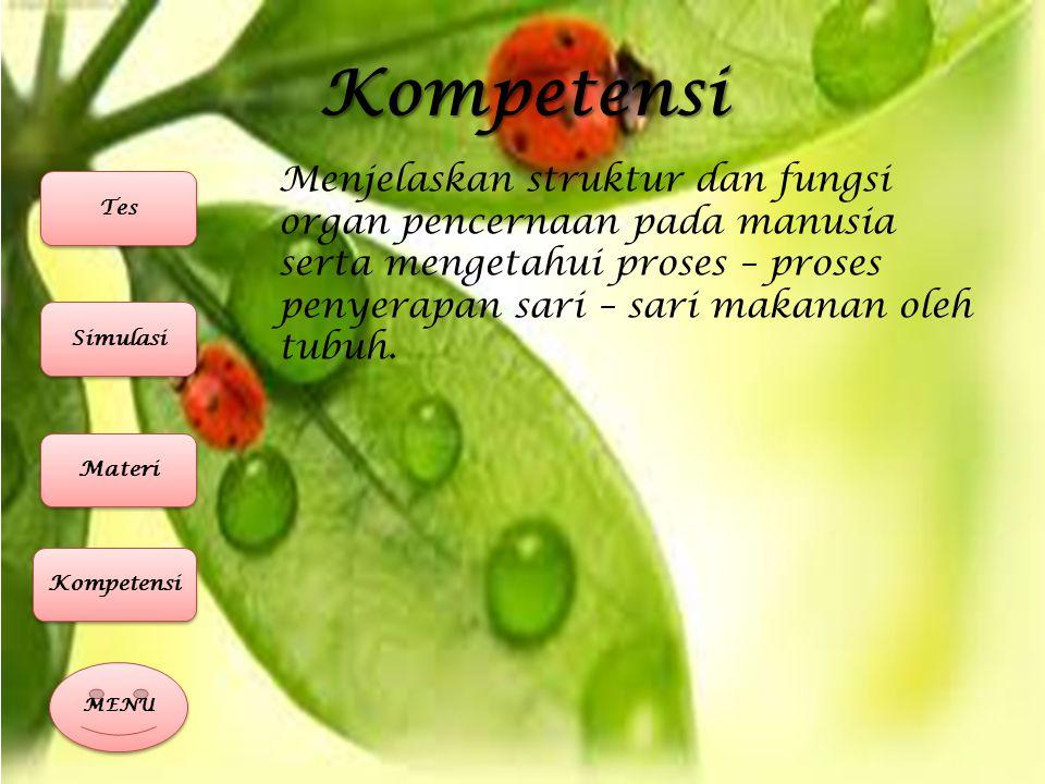 Kompetensi Menjelaskan struktur dan fungsi organ pencernaan pada manusia serta mengetahui proses – proses penyerapan sari – sari makanan oleh tubuh.
