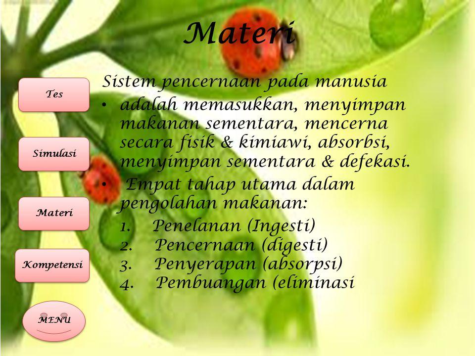 Materi Organ – organ pencernaan 1.