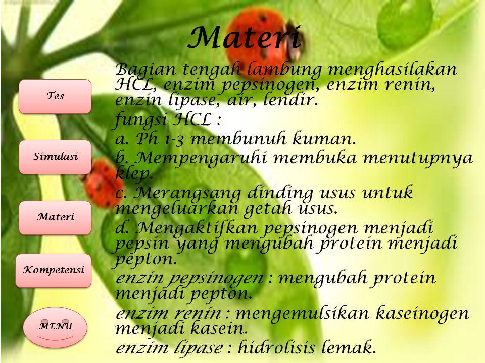 Materi 4.Usua halus/Intestinum Tenue usus halus terdiri dari duodenum, yeyenum, ileum.