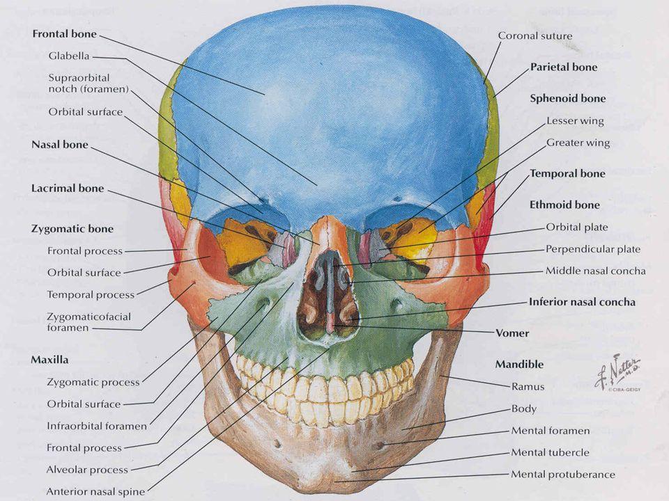 FRAKTUR DEPRES TULANG KEPALA Anatomi Fraktur Tulang Kepala  Tulang kepala menebal : glabela, protuberansia occipital eksterna, prosesus mastoideus & angularis eksternal.