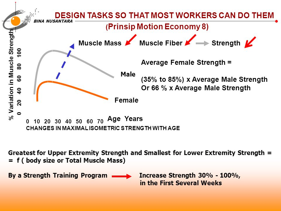 BINA NUSANTARA DESIGN TASKS SO THAT MOST WORKERS CAN DO THEM ( Prinsip Motion Economy 8) 0 10 20 30 40 50 60 70 CHANGES IN MAXIMAL ISOMETRIC STRENGTH WITH AGE 0 20 40 60 80 100 Male Female Average Female Strength = (35% to 85%) x Average Male Strength Or 66 % x Average Male Strength Age Years % Variation in Muscle Strength Greatest for Upper Extremity Strength and Smallest for Lower Extremity Strength = = f ( body size or Total Muscle Mass) By a Strength Training Program Increase Strength 30% - 100%, in the First Several Weeks Muscle Mass Muscle Fiber Strength