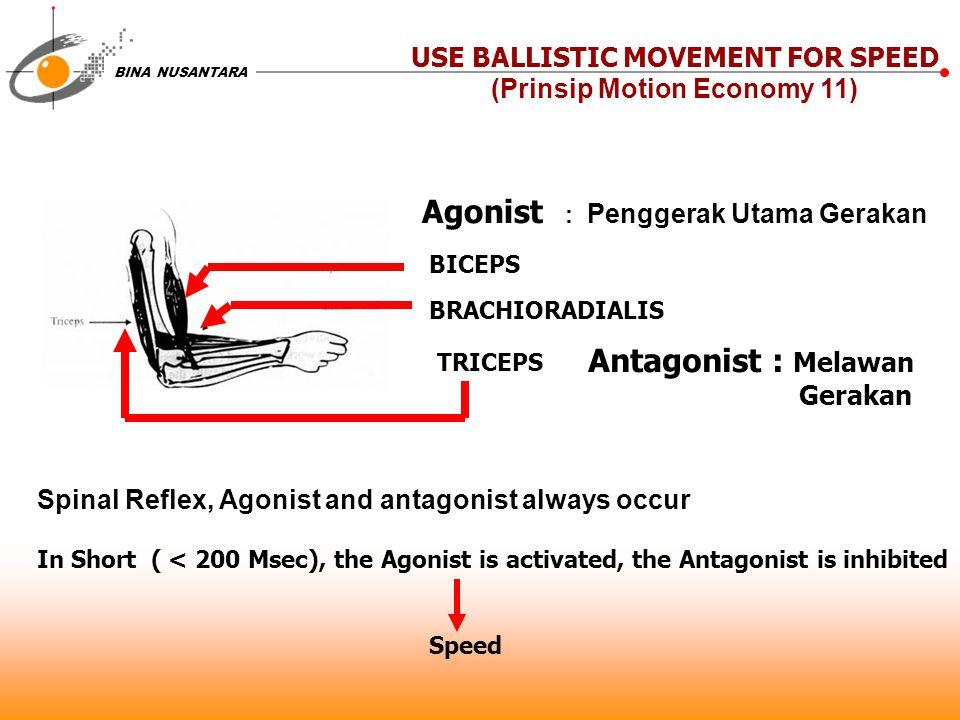 BINA NUSANTARA USE BALLISTIC MOVEMENT FOR SPEED (Prinsip Motion Economy 11) Agonist : Penggerak Utama Gerakan BICEPS BRACHIORADIALIS TRICEPS Antagonis