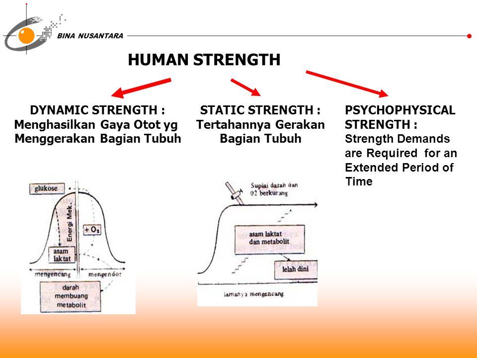 BINA NUSANTARA HUMAN STRENGTH DYNAMIC STRENGTH : Menghasilkan Gaya Otot yg Menggerakan Bagian Tubuh STATIC STRENGTH : Tertahannya Gerakan Bagian Tubuh
